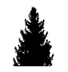 fir-tree with cones silhouette isolated on white vector image