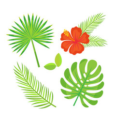 floral decoration tropical leaves and foliage vector image