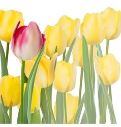 Fresh tulips isolated on white EPS 10 vector image