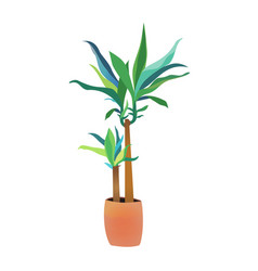 green dracaena plant interior design vector image