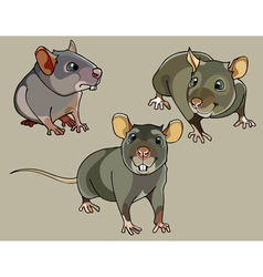 Pretty small rats vector