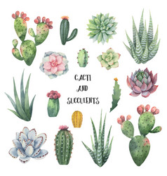 Watercolor set of cacti and succulent vector