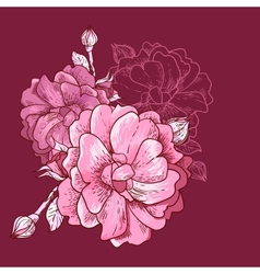 Beautiful Rose Background vector image vector image
