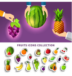 Fruits icons collection vector