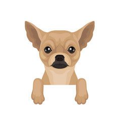 Chihuahua puppy hanging on invisible border home vector