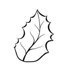 christmas plant leaf coloring book vector image