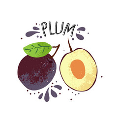 hand draw plum violet plums vector image