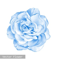 Light blue Rose Flower vector