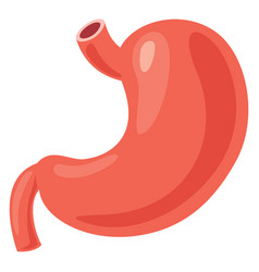 Stomach vector