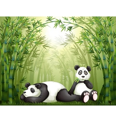 Two pandas in the bamboo forest vector image