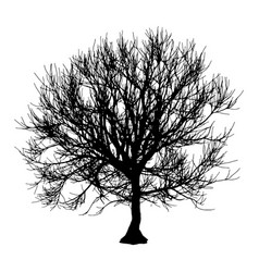 Black dry tree winter or autumn silhouette on vector