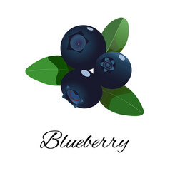 blueberries isolated icon vector image vector image