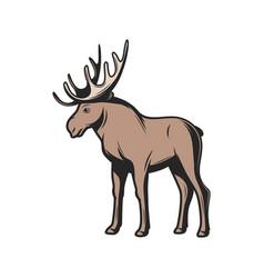 Elk moose wild zoo and hunt animal vector