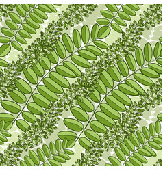 green seamless pattern with acacia leaves spring vector image