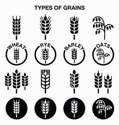 Types grains cereals icons - wheat rye vector