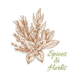 Herbs and spices sketch condiments vector