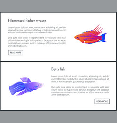 Betta fish and flasher set vector
