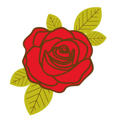 Colorful flowered red rose with leaves closeup vector