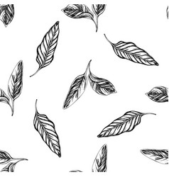 seamless pattern with black and white calathea vector image