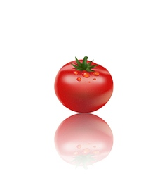 tomato on white background3 01 vector image