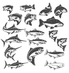 fish on white background carp bass fish trout vector image vector image