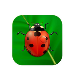 close-up realistic icon with ladybug on vector image
