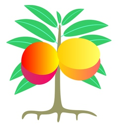 Peach tree vector