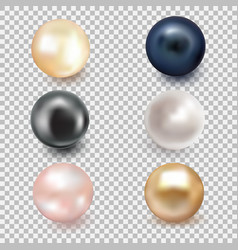 Set of beautiful shiny sea pearl vector
