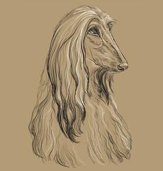 Beige afghan hound hand drawing portrait vector
