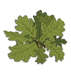 branch of an oak vector image