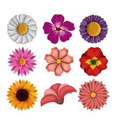 colorful flowers set in white background vector image
