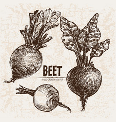 digital detailed line art beet vector image