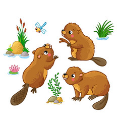 Set with isolated beavers in different vector