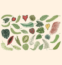 tropical leaves set jungle plants in vintage vector image