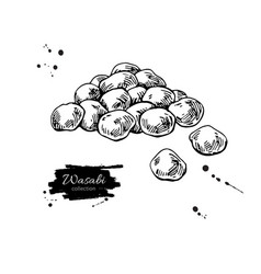 wasabi peas drawing hand drawn japanese vector image