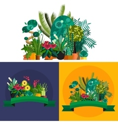 houseplants indoor and office vector image vector image