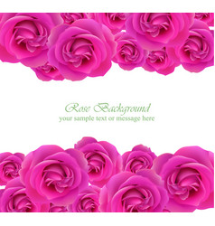 Pink roses card delicate summer card vector