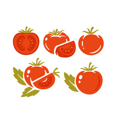 tomatoes on white background collection vector image