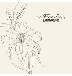 Lily flower isolated over white vector image