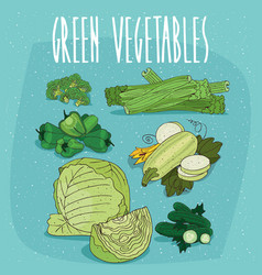 set of isolated clipart green organic products vector image