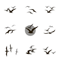 set of seagulls vector image vector image