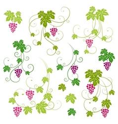 Grape vines set vector image vector image