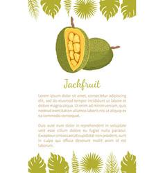 Jackfruit exotic juicy stone fruit poster vector