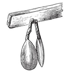Modern lingula vintage vector