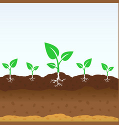 growing shoots out of the ground vector image
