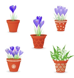 collection of lily of the valley and crocus vector image vector image