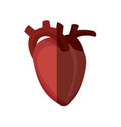 Heart organ healthy design graphic vector