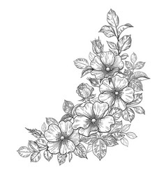 hand drawn dog-rose bunch with flowers and leaves vector image