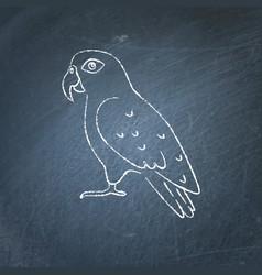 Pionus parrot icon sketch on chalkboard vector