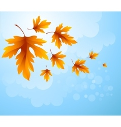 Autumn leaves background of blue sky vector image